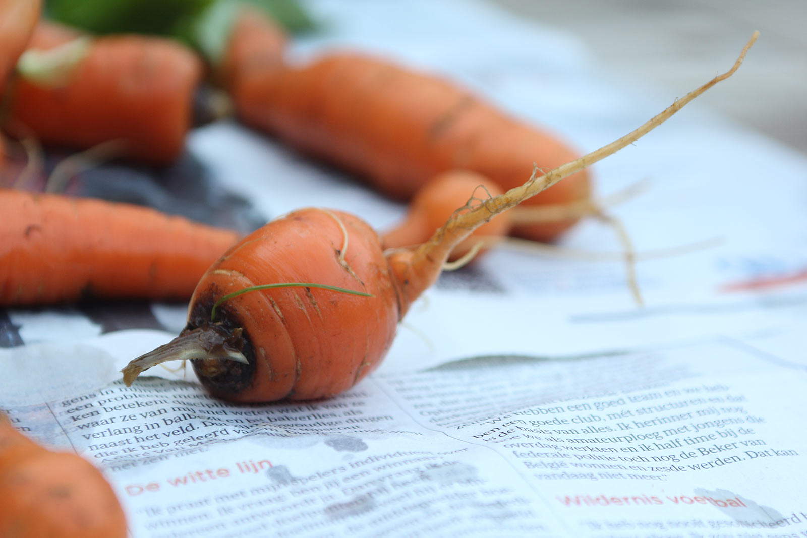 groenten-1