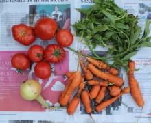 groenten-cover