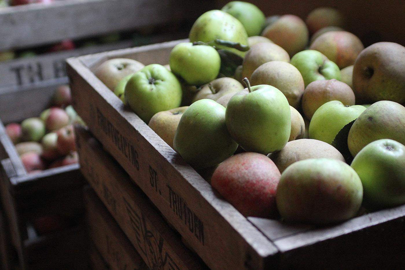 cider-maken-appelen